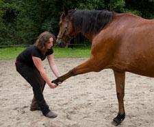 Pferdeosteopathie: Test des Schulterblatts